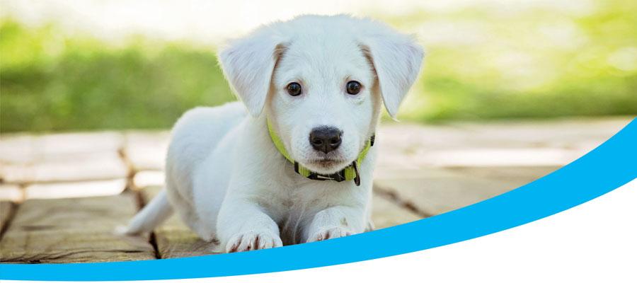 Navigating pets and strata header image