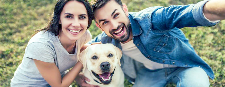 The perfect pets for your strata property header image