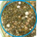 Trichoderma example