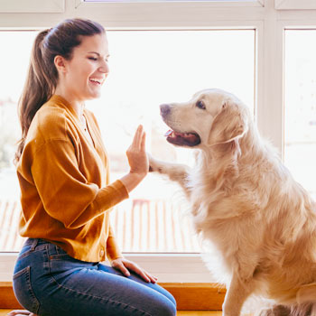 Pets in strata: NSW's highest court rules 'no pets' by-law is oppressive feature image