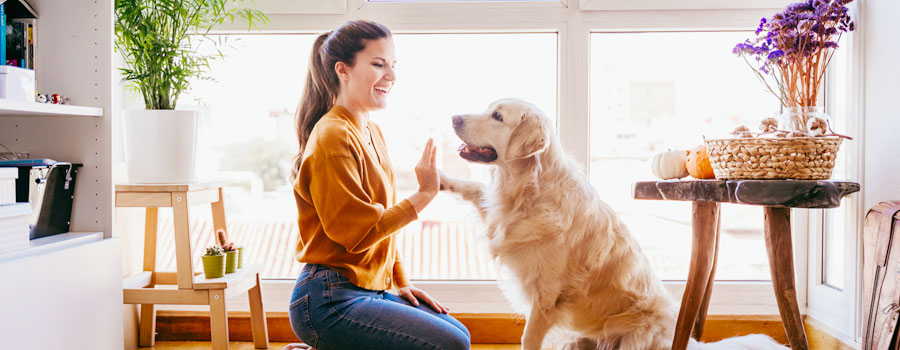 Pets in strata: NSW's highest court rules 'no pets' by-law is oppressive header image